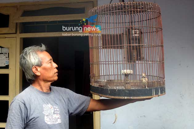 Burung Jalak Rio