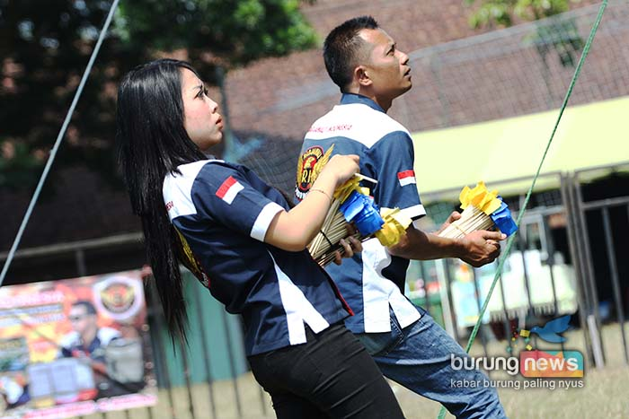 Penilaiaan Love Bird Model Stick Radjawali Indonesia Digandrungi Kekemania Jawa Timur Burungnews