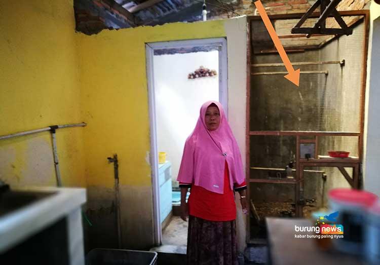 Ibu Wagiyem Peloloh Jalak Di Klaten Dapur Kami Terganggu Masa Diam Saja Burungnews