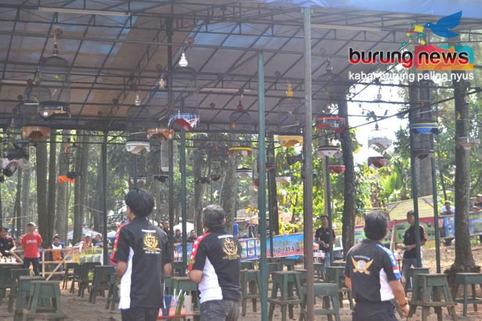 Oriq Jaya Harmony Bandung Pengembunan Tiap Pagi Jadi Kunci Kesuksesan Lb Top One Meraih Double Winner Burungnews