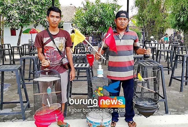 New Geneng Bc Jombang Tempat Berburu Love Bird Durasi Istimewa Burungnews