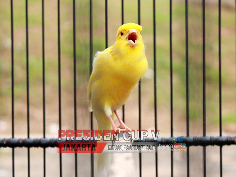 Presiden Cup V 10 2ah Makin Stabil Di Jalur Juara Judika Tampil Mengejutkan Burungnews