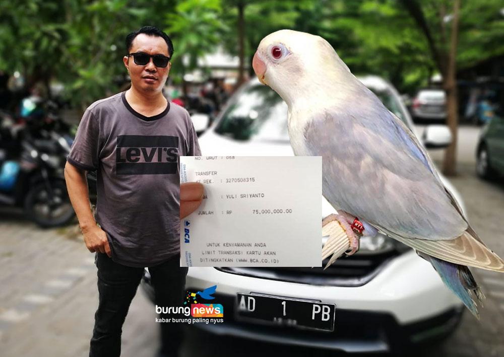 45+ Foto Gambar Burung Lovebird Split HD Terbaru