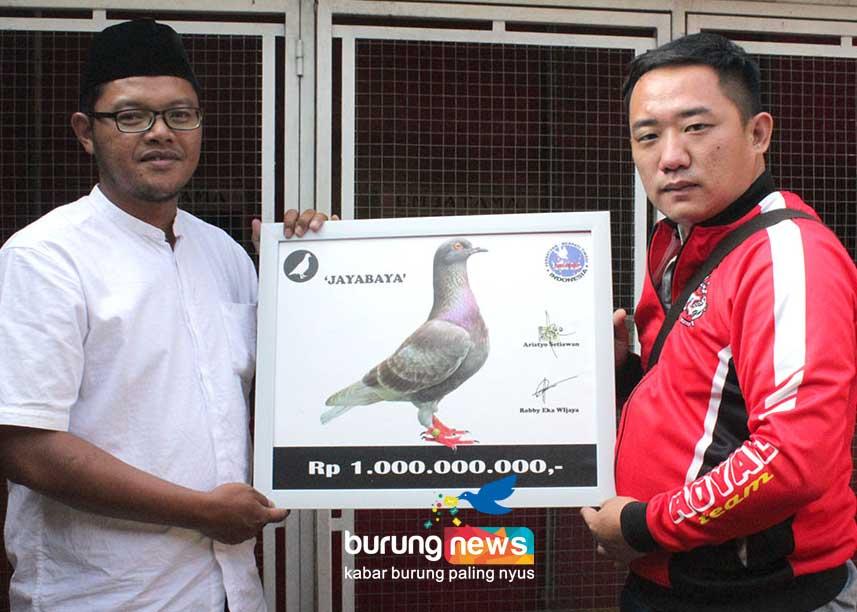 Rekor Transfer Merpati Di Indonesia Pembalap Tinggian Jayabaya Dilipat 1 Miliar Wow Benarkah Siapa Pembelinya Burungnews