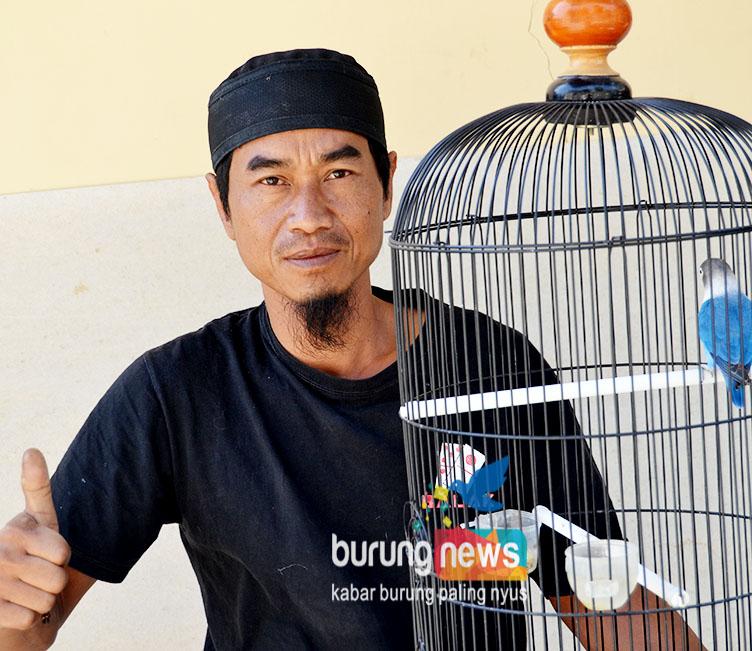 Mang Acenk Ciater Sf Subang 10 Langkah Yang Membuat Love Bird Gacor Alami Burungnews